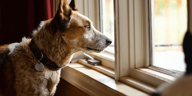 Taurine And Dogs: 4 Questions Answered