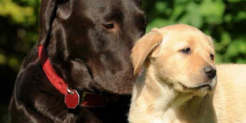 Bringing The Generations Together: Raising a Puppy With An Older Dog