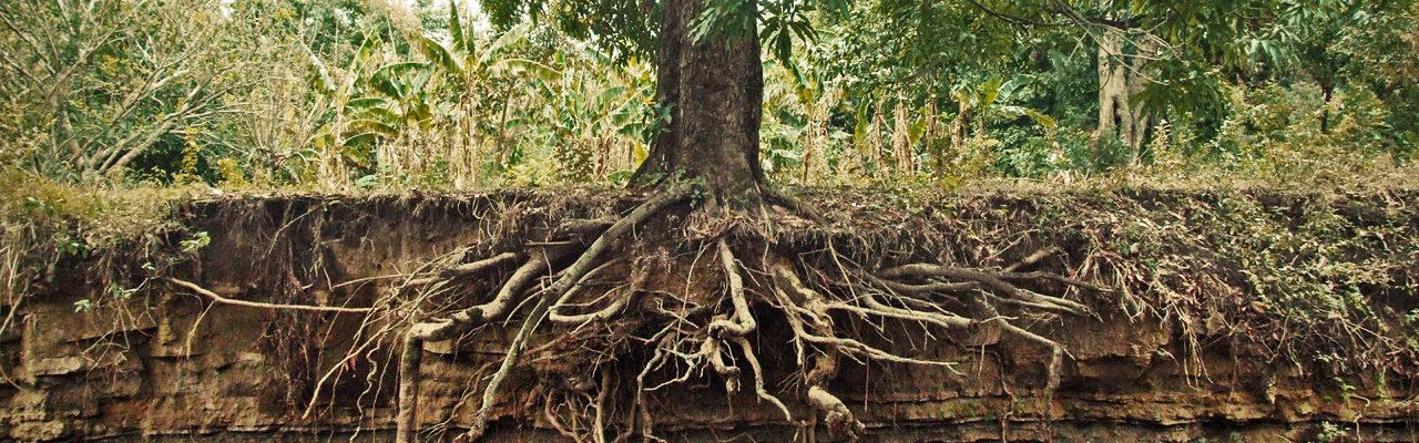 How To Design Around Exposed Tree Roots