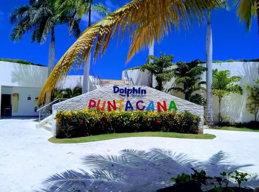 C:\Users\Usman\Google Drive\GUEST POSTS - BLOGPSOTS - LINKS BUILDING PROJECTS\Roman\2020\May 2020\Part-2(Usman\dolphin-discovery-punta-cana.jpg